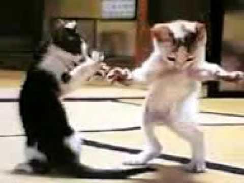 Le chat qui danse