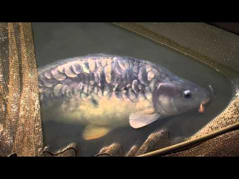 TRAILER: The Year of the Compulsive Angler - Late Autumn in France | FishingTV