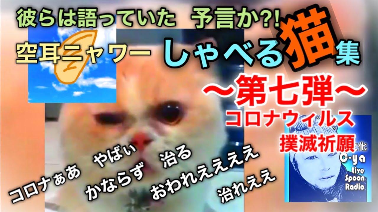 しゃべる 動画 猫 猫がしゃべる!意外とおしゃべりな猫さんの動画まとめ