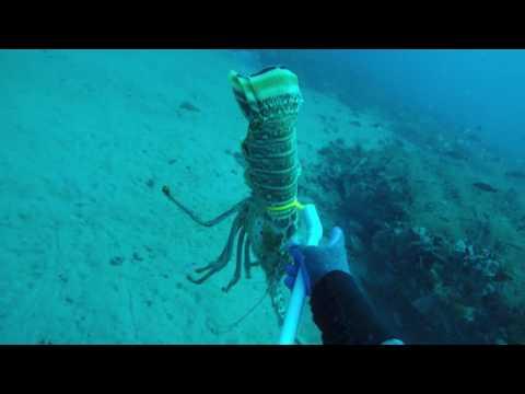 Mini lobster season 4K video test