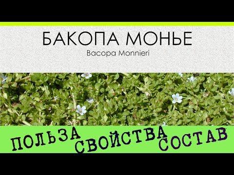 Бакопа Монье (Bacopa Monnieri)
