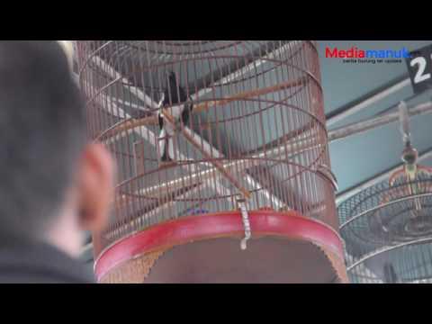 brandy watch magpie robin singing speed racer house
