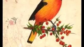 (Pintura Decorativa) Como pintar un Pajaro con acrilicos sobre Papeles?