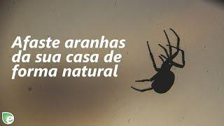 Aranha veias das Como naturalmente da para me livrar faço