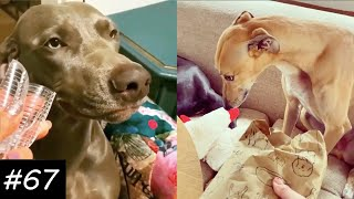 OMG These Dogs Made A Mess  | Guilty Dogs Video Compilation