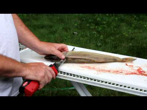 How to fillet a walleye with an electric knife