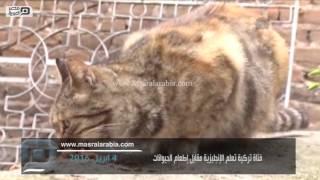 مصر العربية | فتاة تركية تعلم الإنجليزية مقابل إطعام الحيوانات