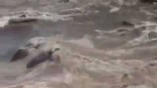 tsunami 2004 LOBOJOQUI full video.flv