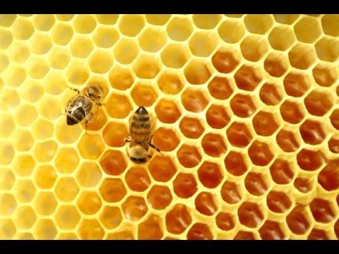Bal Arıları Hakkında 10 İlginç Bilgi