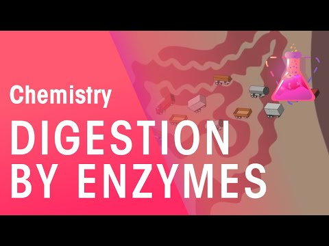 Digestion By Enzymes | Organic Chemistry | Chemistry | FuseSchool