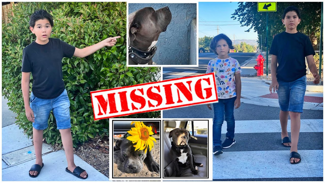 The Search Continues... who was knocking on my car ( Benji) | Lito and Maddox family