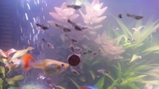 Trennung der Fisch babys
