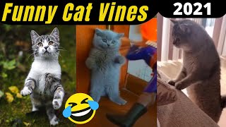 Funny Cat Vines Compilation  Try Not To Laugh Challenge 2021