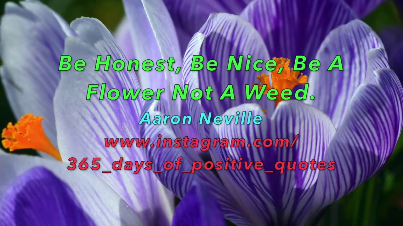 Quotes About Flowers Weeds Aaron Neville Day 133 13 May