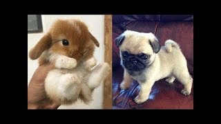 Funny Animals Compilation 2019 - Cutest Animals Ever