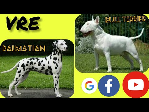 TOP10 Cross mixes  dogs # 5 (  Labrador, Beagle, Sharpei, Dalmatian, St Bernard, Bull terrier,Boxer