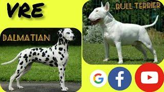 TOP10 Cross mixes  dogs # 5 (  Labrador, Beagle, Sharpei, Dalmatian, St Bernard, Bull terrier,Boxer