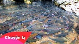 Giải mã bí ẩn suối cá thần ở Cẩm Lương, Cẩm Thủy, Thanh Hóa Chuyện Lạ Bốn Phương