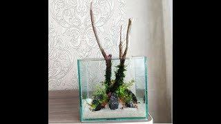 Мини аквариум / Mini aquascape