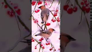 Winter Birds 2 - Live Lock Screen