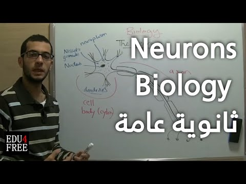 The nerve cell / neuron - Chapter 5 - Biology - Edu4free
