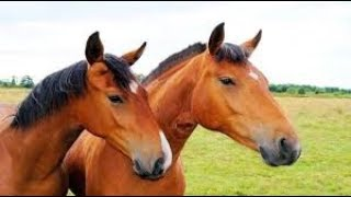 Lagu Anak Naik Delman Istimewa Naik Kuda Odong Odong Lagu Anak Populer