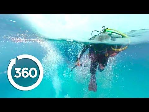 MythBusters: Shark Shipwreck (360 Video)