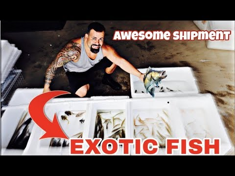 *NEW* COLOMBIAN TROPICAL FISH SHIPMENT 10/03/2019 UNBOXING ALL THE FISHES Part 1