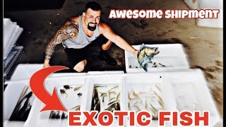 new-colombian-tropical-fish-shipment-10-03-2019-unboxing-all-the-fishes-part-1