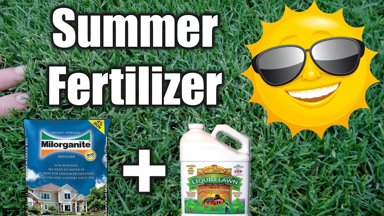 Best Summer Fertilizer For Lawns Youtube