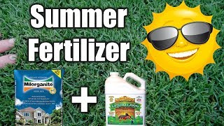 Best Summer Fertilizer for Lawns