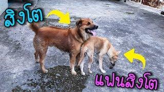 พามาดูหมาของพี่นิวมีแฟนแล้ว-┃vlog-my-dog-1