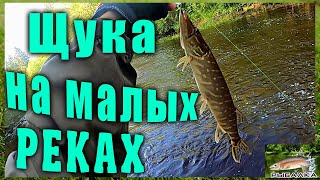 Ловля щуки на малых реках Рыбалка в Ленинградской области Июнь 2021г