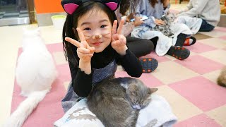 Boram and her Fun day with kittens