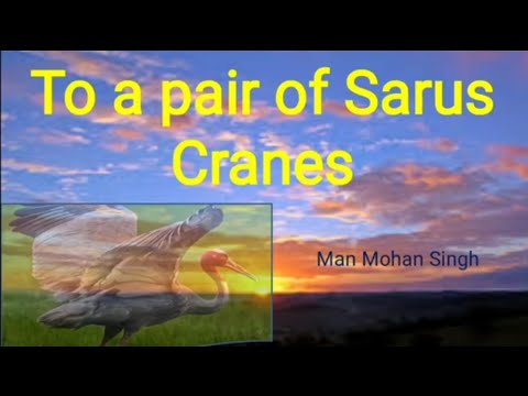 To a pair of Sarus Cranes