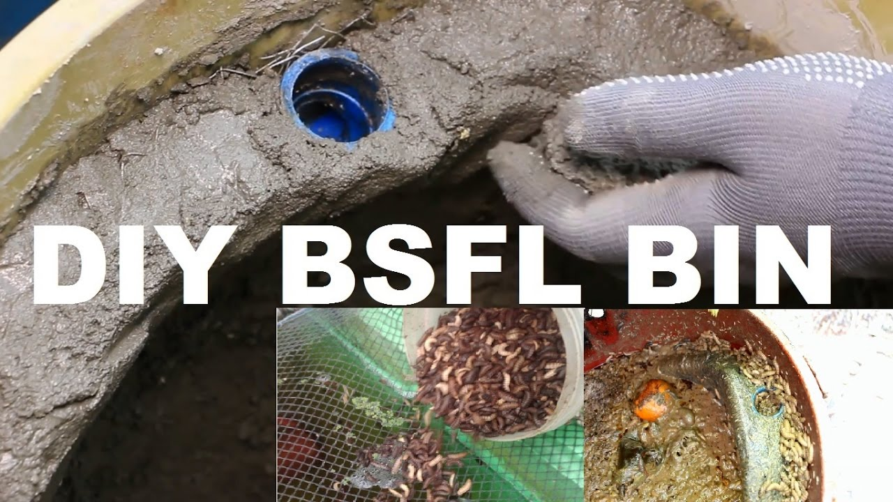 Diy Black Soldier Fly Larvae Bin Oa Ako Telemagazine Ptv 4 Youtube