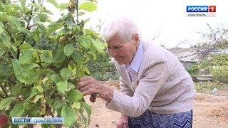 92-летняя жительница Любимовки раскрыла секрет долголетия и  хорошего урожая фруктов