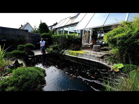 Modern Koi Blog #3998 - Nicos Genesis Teich mit leichten Vergesellschaftungsproblemen