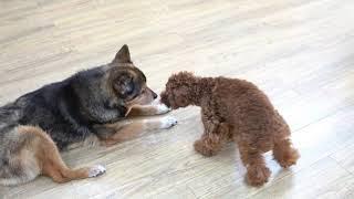 ペットホテル パピーパーティ 犬の保育園(dog nursery)|DOG DIAMOND ...