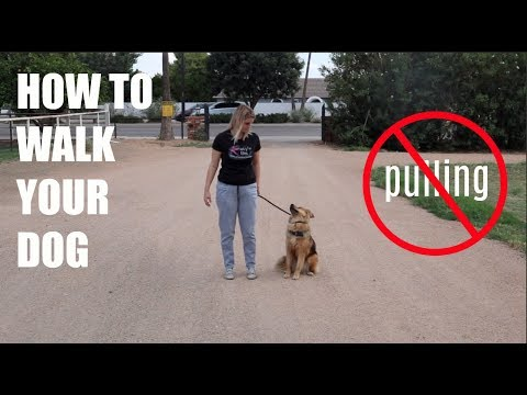 HOW TO WALK YOUR DOG (and stop them from pulling)