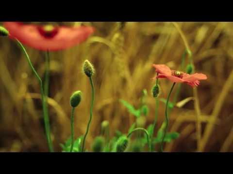 Onnu Vilichaal - Malayalam Devotional Song - HD 1080p