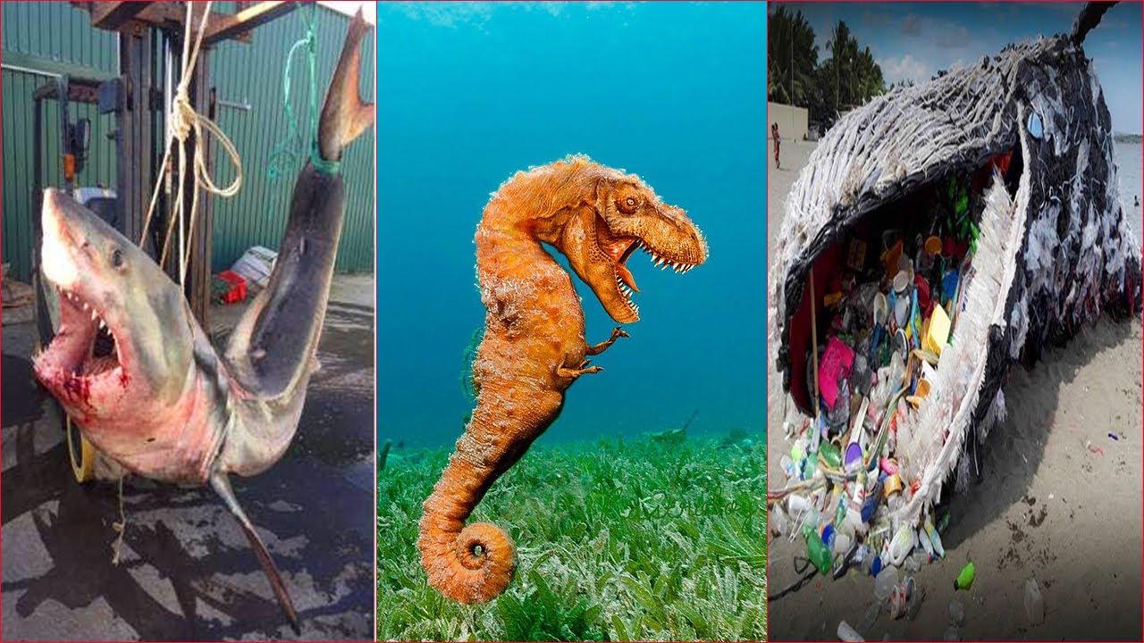 Catching Seafood 🦀🐙 ASMR Relaxing (Catch Shark , Catch Fish ,Deep Sea Monster ) - Tik Tok #181