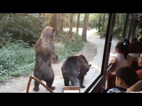 UberFacts   Bears Entertain Tourists   Facebook