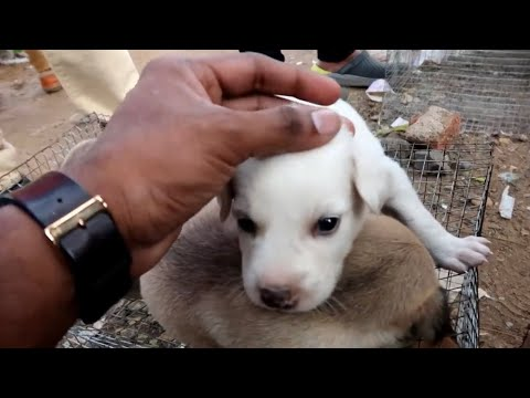 பல்லாவரம் Friday Flea Market Pallavaram | Pets And Everything WOW