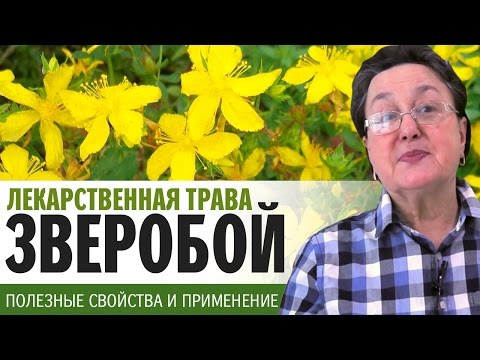 Трава ЗВЕРОБОЙ свойства | универсальное лекарственное средство | средство от весенней депрессии