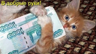 Смешные картинки про кошек и котят Выпуск №74  FUNNY CATS СМЕШНЫЕ КОШКИ