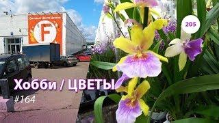 205#164 / Хобби-Цветы / 09.2019 - Floreville (ФЛОРЭВИЛЬ. МОСКВА)