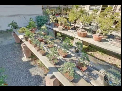 Grove Way Bonsai Nursery | Hayward, CA | Garden Centers