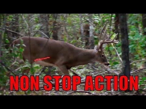 25 Kills in 20 Minutes! (ULTIMATE Deer Hunting Compilation)