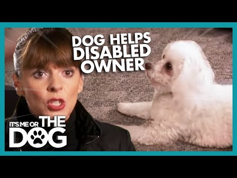 Teaching A Dog To Help A Disabled Owner   It's Me Or The Dog